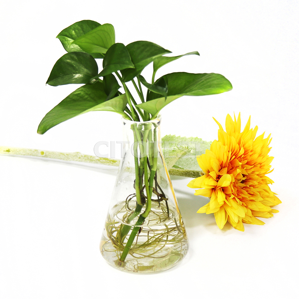 Erlenmeyer Flask, Glass Material
